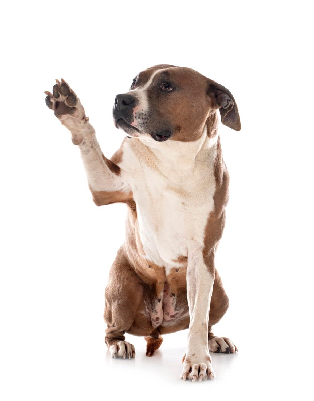 Education Canine Nice Reseaux Sociaux 1