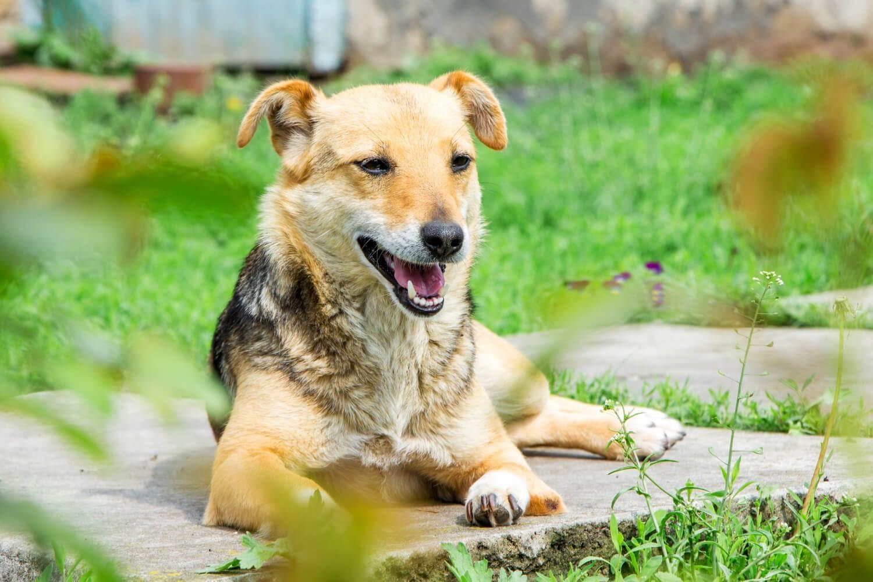 Education Canine 06 Jardin Chien 6