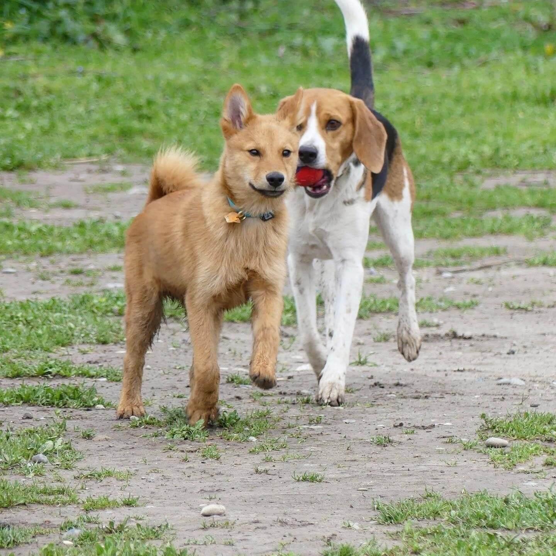 Education Canine06 Initiation Agility 3