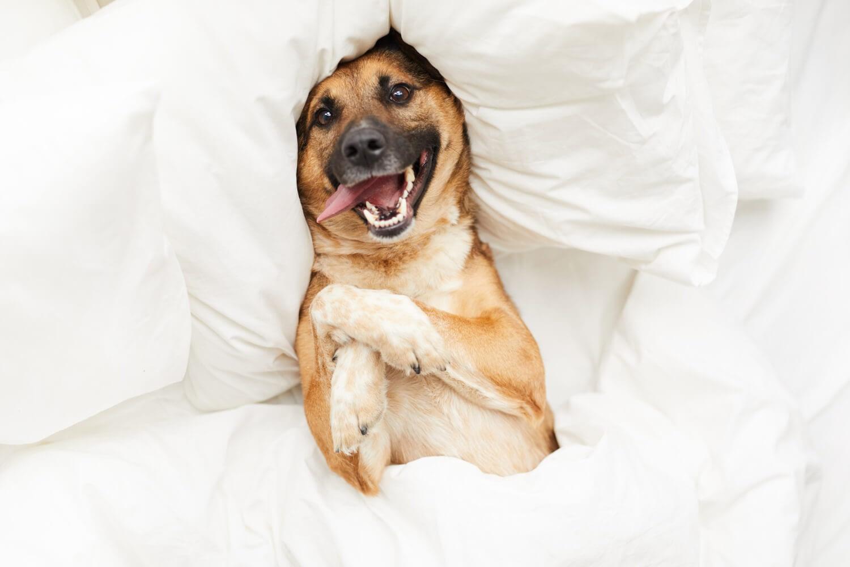 Education Canine Nice Preparer Arrivee Nouvel Animal 7