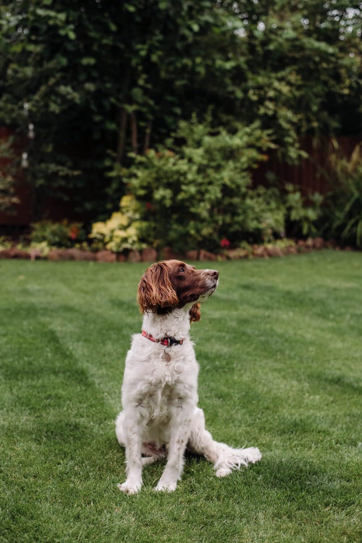 Education Canine 06 Jardin Chien 3