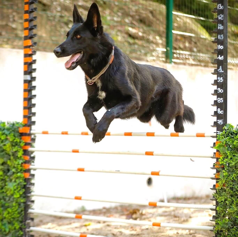 Education Canine Nice PYTAH
