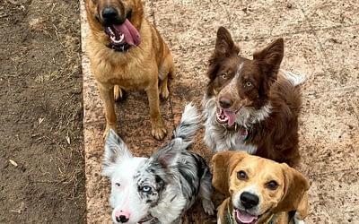L'éducation positive des chiens à Nice