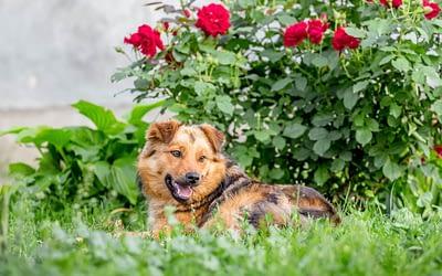 Le jardin est l'ennemi des chiens