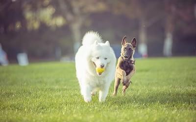 Le comportementalisme canin