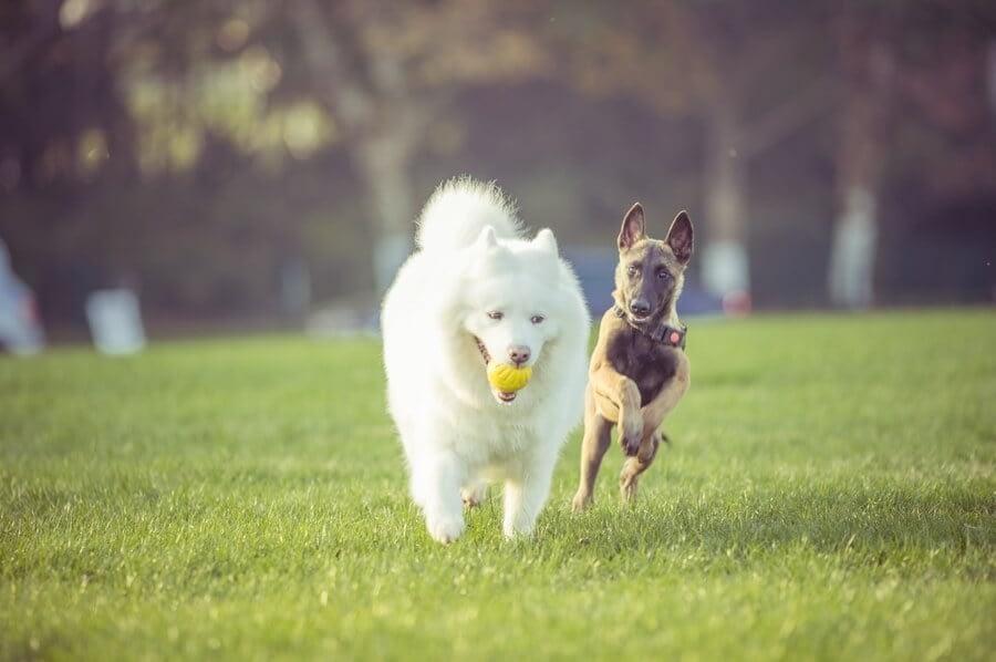 Education Canine Nice Comportamentalsite 1