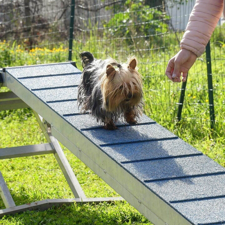 Education Canine06 Initiation Agility 2