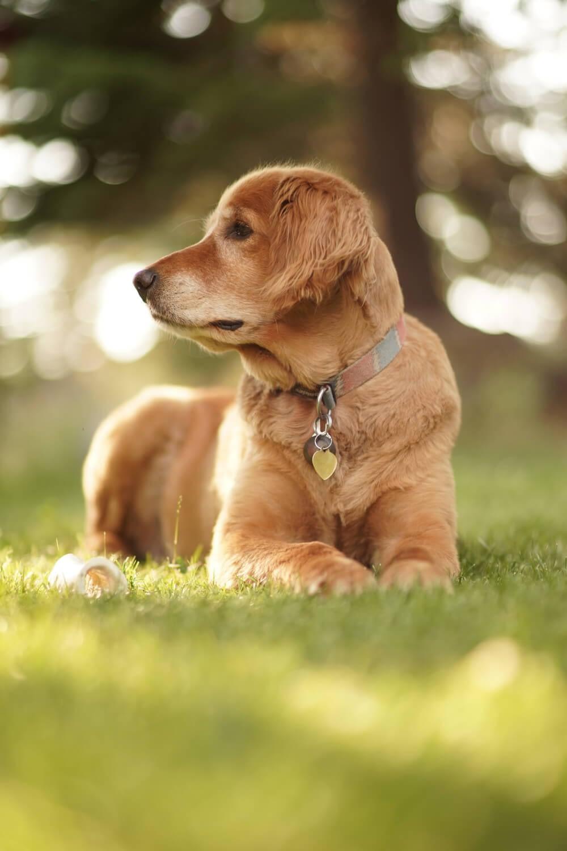 Education Canine Nice Preparer Arrivee Nouvel Animal 3
