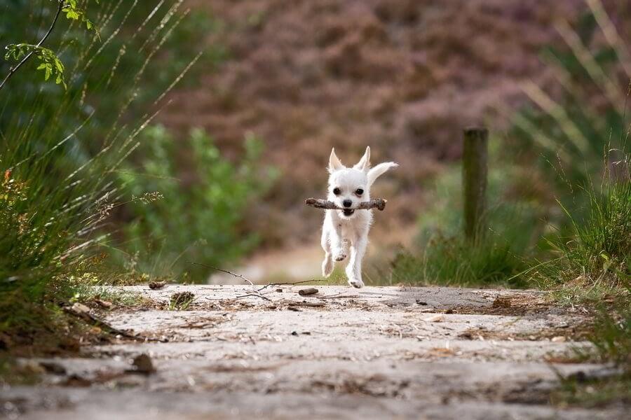 Education Canine Nice Comportamentalsite 2